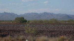 The desert is pretty