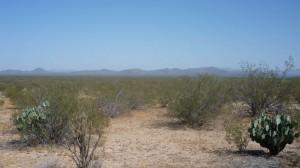 The desert is still pretty.