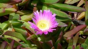 More flora.