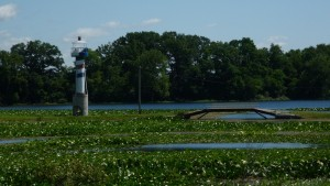 A lighthouse in a swampy lake?
